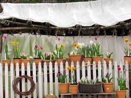 photo essay  the charm  amp  nostalgia of colonial williamsburg    s many    colonial nursery white fence
