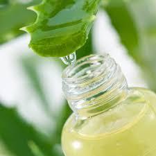 Image result for Aloe vera gel for termite control