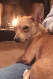 Suspicious chihuahua is suspicious via Relatably.com