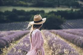 Provence <b>Lavender</b>: the heart and soul of Provence | Provence Guide