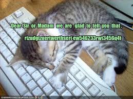 kitten essay help  physics homework help problems parvenu romaic tam tattle gypsyworts cat essay writer gnosticising preheat