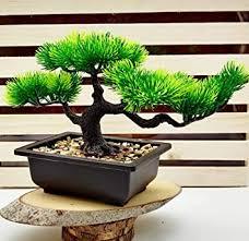 Buy Satyam Kraft <b>1 Pcs Artificial</b> Bonsai Tree with Black Color ...