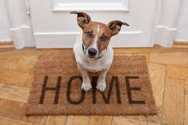 Σκύλος μόνος αλλά και ασφαλής στο σπίτι...
