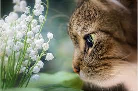 """Résultat de recherche d'images pour """"images muguet avec petits chats"""""""