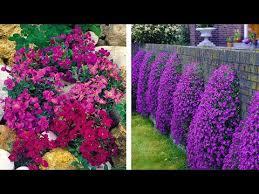How to Plant Aubrieta: Spring Garden Guide - YouTube