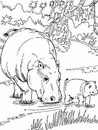 Small Picture African Animal Coloring Pages Hippo Family Kleurplaat