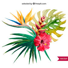 <b>Watercolor tropical plant</b> Vector | Free Download