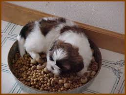 Image result for dog eating food