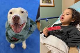 Owner arrested over <b>dog's</b> attack on 3-year-old girl in <b>Spring</b> ...