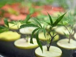 Flora Terra: Santa Rosa's #1 Dispensary