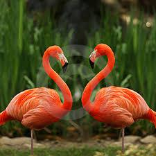Resultado de imagen para flamencos rosados