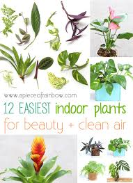 easy indoor plants for beauty and clean air a piece of rainbow blog best office plants no sunlight