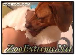 Zooskool Page 5 Extrem Bestiality Zoo Porn From Around The World ...
