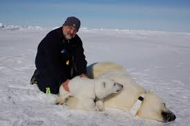 Polar Bears and Global Warming   Polar Bear Facts and Information Daily Mail Ship Abandons Global Warming Research Due to EXCESSIVE ICE