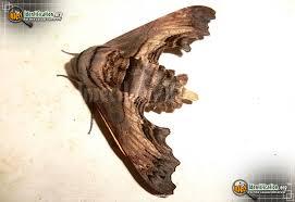 Nova Scotia Insects (646 Found)