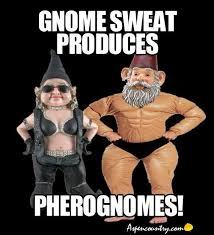 Gnomes: Funny Gnome Humor on Pinterest | Gnomes, Funny Gnomes and ... via Relatably.com