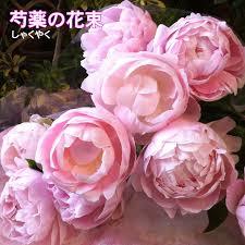 「芍薬(シャクヤク)の花」の画像検索結果