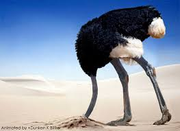 Image result for ostrich gif head in sand