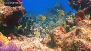 Image result for marine biomolecules