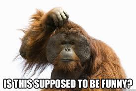 Perplexed Primate memes   quickmeme via Relatably.com