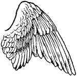 Images & Illustrations of Wing