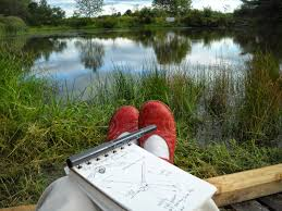 remains of the day nature journaling as meditation thoughts ricochet through my brain all day when i sit down at my desk to work drive in the car cook dinner take a shower lie down to sleep