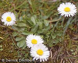 Image result for weeds or flowers