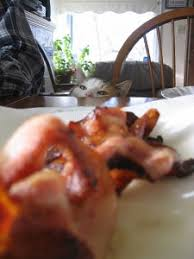 <b>Bacon Cats</b>! - Royal <b>Bacon</b> Society