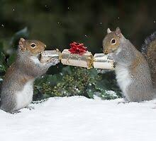 Squirrel Greeting Cards | Redbubble