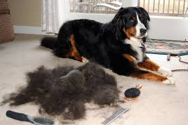 The 20 Best Pet <b>Hair</b> Vacuums in 2019 That Actually Work