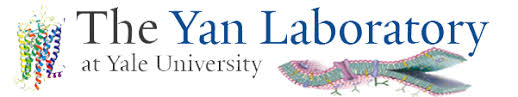 Image result for yan lab yale university