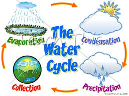 water cycle   printable picture theme flash cards   classroom    water cycle