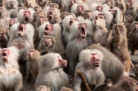 Image result for khỉ dã nhân đánh nhau