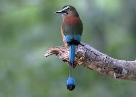 Kết quả hình ảnh cho chim đẹp
