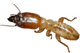 NJ Termite Control