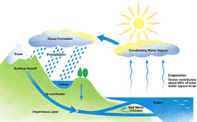 the water cycle   ted edthe diagram below shows the water cycle  which is the continuous movement of water on  above and below the surface of the earth