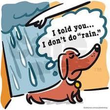 Bildresultat för dog refuses to walk in the rain fun