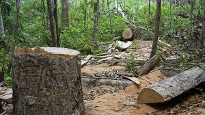 Image result for animals dying because of deforestation