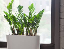 Image result for plants
