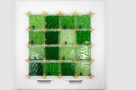 <b>THE CORAL</b> - home algae farming