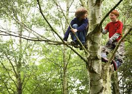 children and teenagers taking risks kids gamble unknowns and two boys climbing on tree