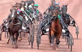 """Résultat de recherche d'images pour """"image cheval pmu"""""""