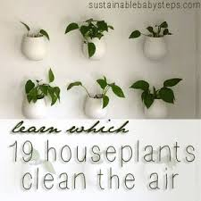 19 houseplants clean the air from sustainablebabystepscom best office plant no sunlight