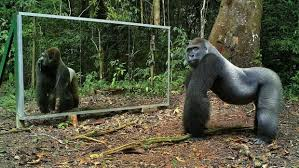 Jungle animals go <b>wild</b> upon seeing themselves in a <b>mirror</b> for the ...