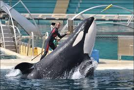 Afbeeldingsresultaat voor orka s