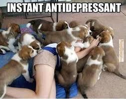 FunnyMemes.com • Animal memes - Instant antidepressant via Relatably.com