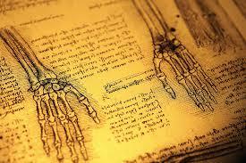 biological anthropology bsc hons kent ac uk biological anthropology bsc hons