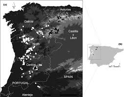 The distribution range of Silene sect. Cordifolia in northern Spain ...