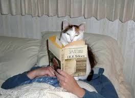 Image result for cats doing funny things
