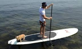 Image result for stand up paddle board pictures on rivers
